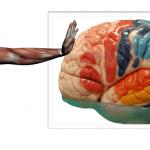 Neuroanatomía Funcional del Movimiento