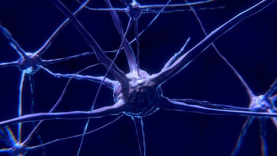dia mundial del cerebro 2021 lema detener esclerosis multiple